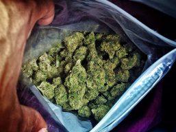 weed-marijuana